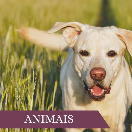 Animais2